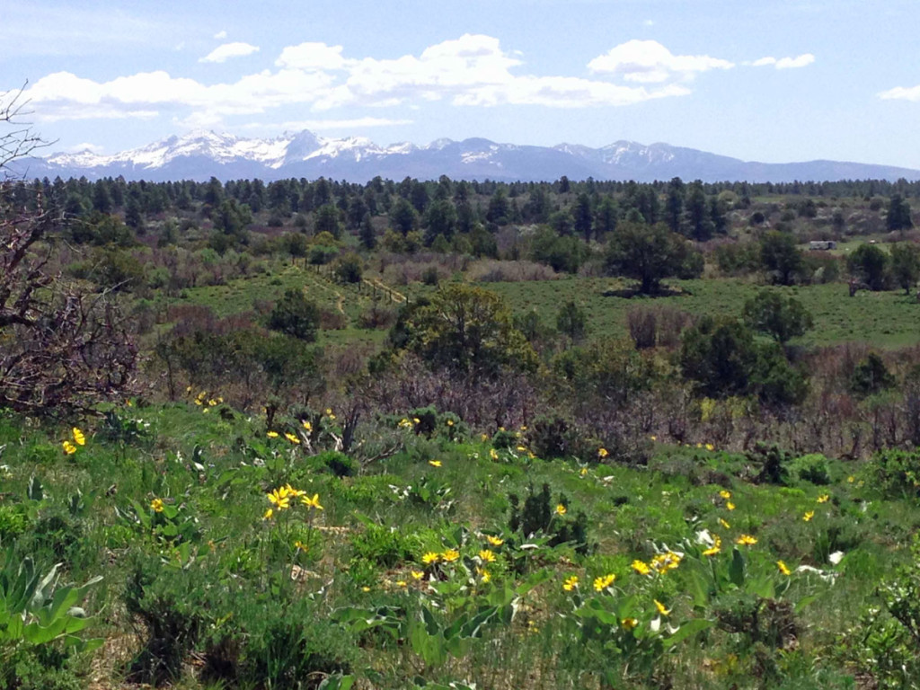 Mesa_View_Yak_Ranch_summer-pasture