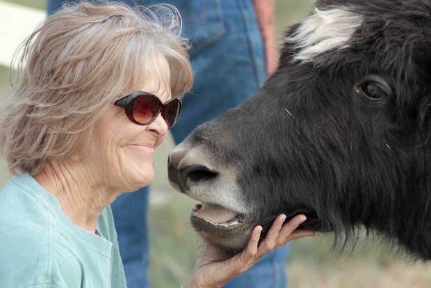 Durango Herald Article | Mesa View Yak Ranch